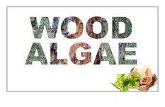 الأخشاب-والطحالب