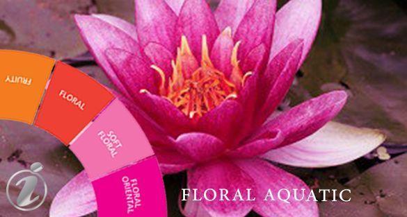 زهري مائي Floral Aquatic