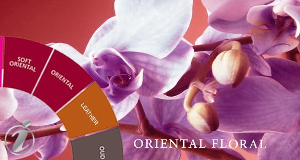 شرقي زهري Oriental Floral
