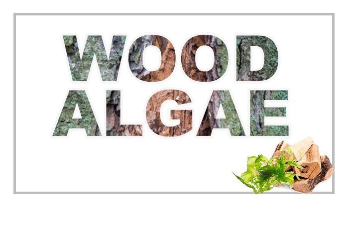 الأخشاب والطحالب