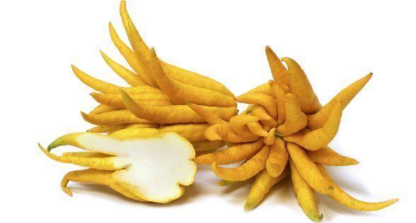الأترج Citron