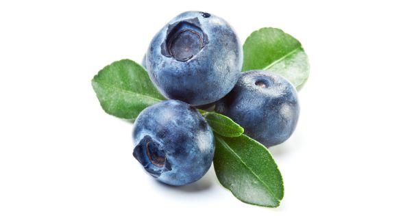 توت ازرق Blueberry