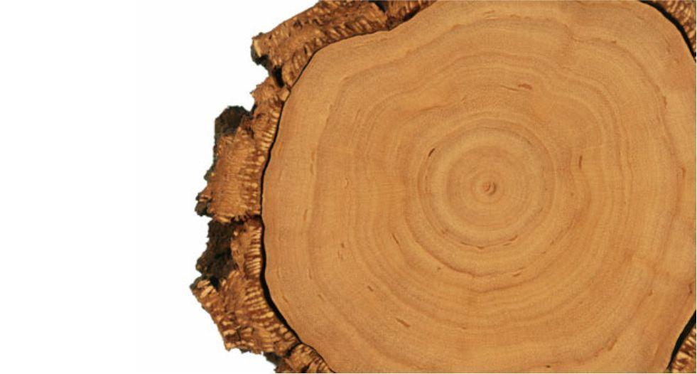 c6de29149 خشب الكشمير Cashmir wood